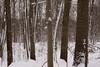 IMG_7580_snow
