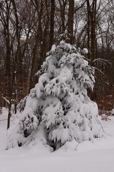 IMG_7599_snow