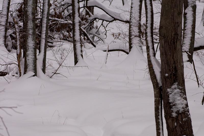 IMG_7567_snow
