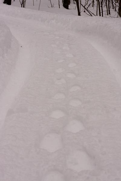 IMG_7544_snow