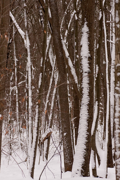 IMG_7573_snow