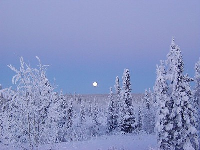 The moon rises in the eastern sky, over a frosted forest of black spruce, as the sun is setting in the late afternoon western sky.