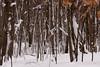 IMG_7545_snow