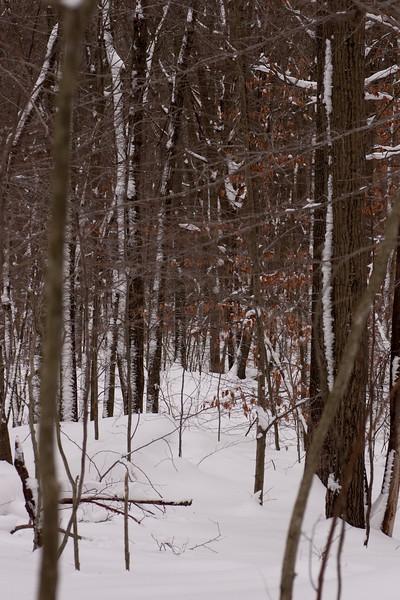 IMG_7546_snow