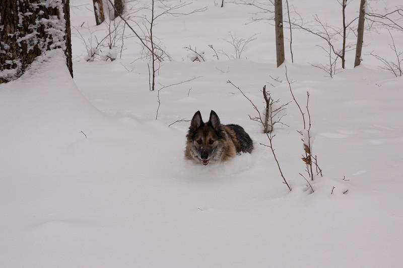 IMG_7586_snow