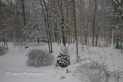 Our backyard, and off into the woods.