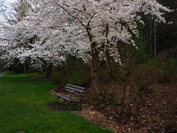 Seattle Arboretum 3-16