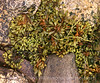 Seaweed 1 warmer 13x19 copy