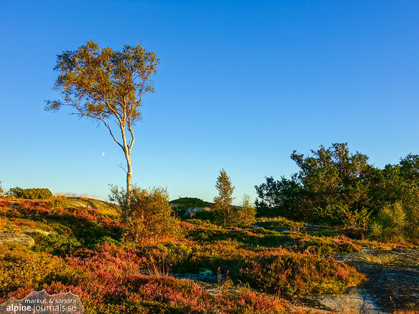 Lone tree on an island in the Stockholm archipelago