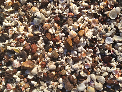 Coarse detritus on Playa Conchal