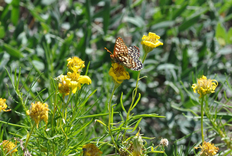 On our first flower stop, we spotted this butterfly.  Unlike most butterflies, this one sat patiently as I took pictures.