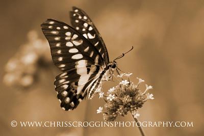 Butterfly Feeding, Brookside Gardens, Maryland