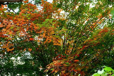Early Fall Garden
