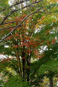 Love the Acer Rubrum, especially when it's just starting it's glorious show.