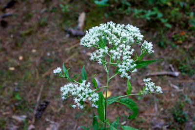 Lovely Queen Anne's Lace