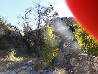 A look at an old Oak tree at the start of the Big Narrows hike.