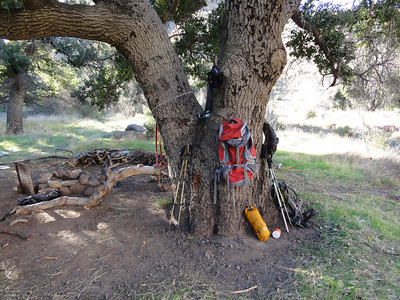 The Big Oak Tree at Ant Camp. My backpack hanging.