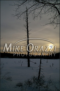 110213_Sessions_Woods__1028