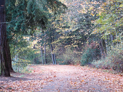 Seward Park WA Fall walk