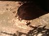 mint and basil shadows