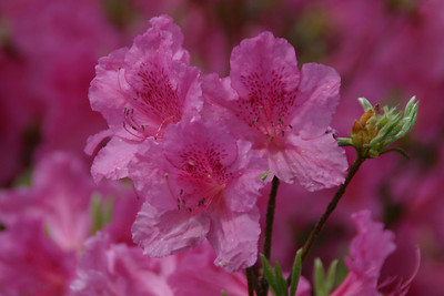 Shallowford Flowers