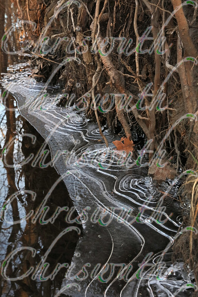 Ice Shapes in the Swamp