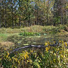 Shaw Nature Reserve 10172014-6149