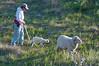 Newborn lamb, momma ewe & Bonifacio.