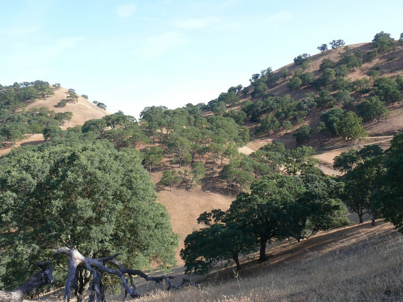 This trail provides great views across Shell ridge Open Space.  The grass is already turning brown.