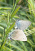 butterflies (2)_pale blue_P1090229