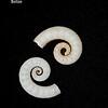 Ram's horn squid_labelled_IMG_7526
