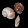 land snails_IMG_7693