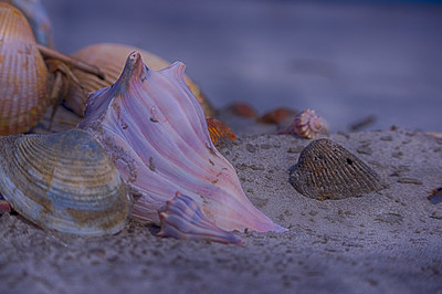 shells at IOP