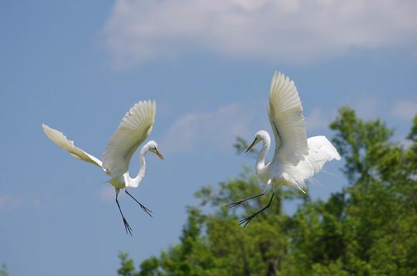 Shelly's South Carolina Birds