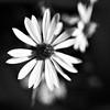 Hipstamatic: Chunky Lens, Aristotle Film