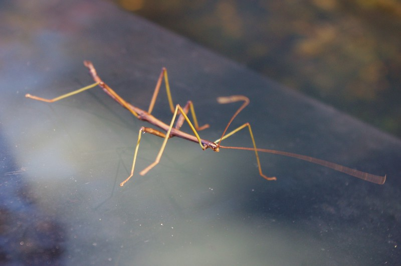 We had a cute stick bug waiting for us when we got back to the car.<br /> 10/15/2011