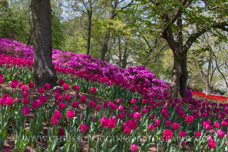 Sherwood Gardens 4