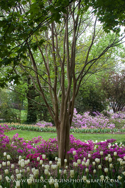 Sherwood Gardens 6