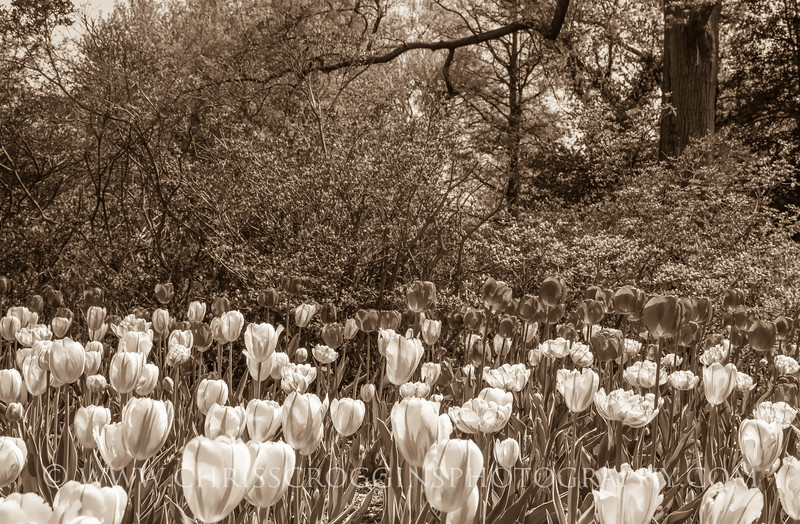 Sherwood Gardens 1
