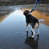 Emi's dog Charlie could walk on ice at Shojin-ike pond.