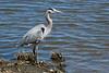 shorebirds-191a