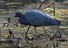 birds-134