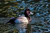 shorebirds-109a