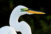 birds-145sm
