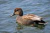 shorebirds-409a