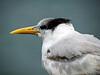 birds-126