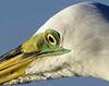 birds-124