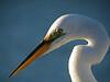 birds-125