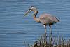 shorebirds-187a