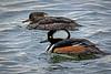 shorebirds-408a